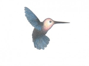 Dies ist kein Kolibri, Buntstiftzeichnung, 13,8 x 10 cm, 2018