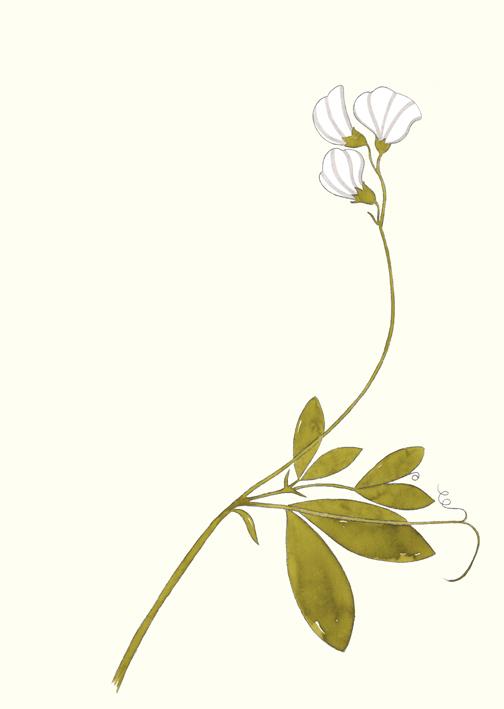 Streifenblümchen, Aquarell, 24 x 32 cm, 2014