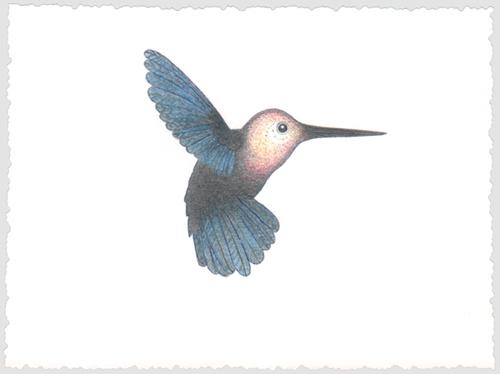 kein Kolibri, Buntstiftzeichnung, 13,7 x 10 cm, 2018